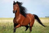 Расклад Конь