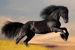 Лошадь символ