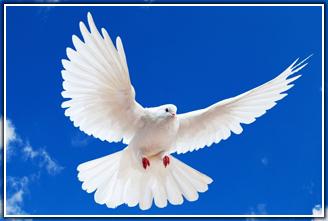 Голубь (голубка)